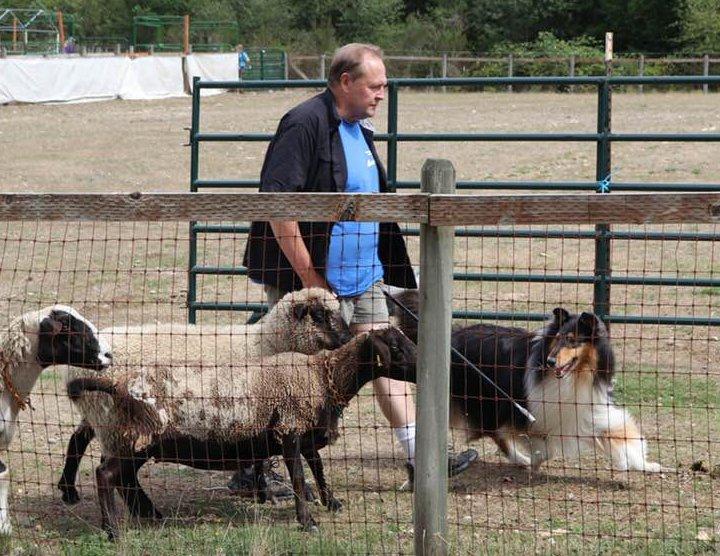 Benny herding
