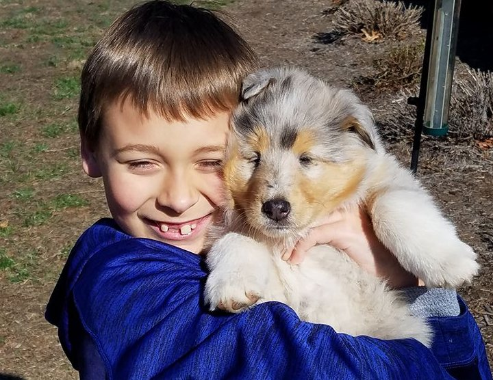 Boy with blue merle puppy